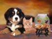DOG - CAT - PET PORTRAIT - Personalized Gifts Ideas